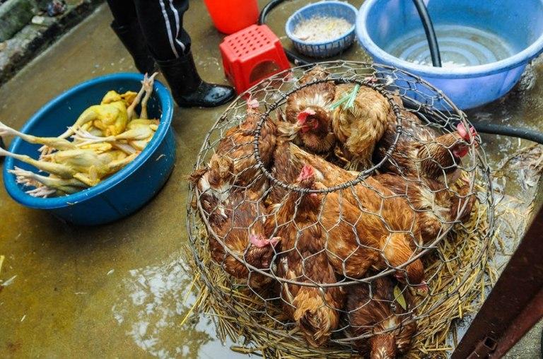 Lebendtiermärkte: Schockierende Aufnahmen aus Asien ohne Ende