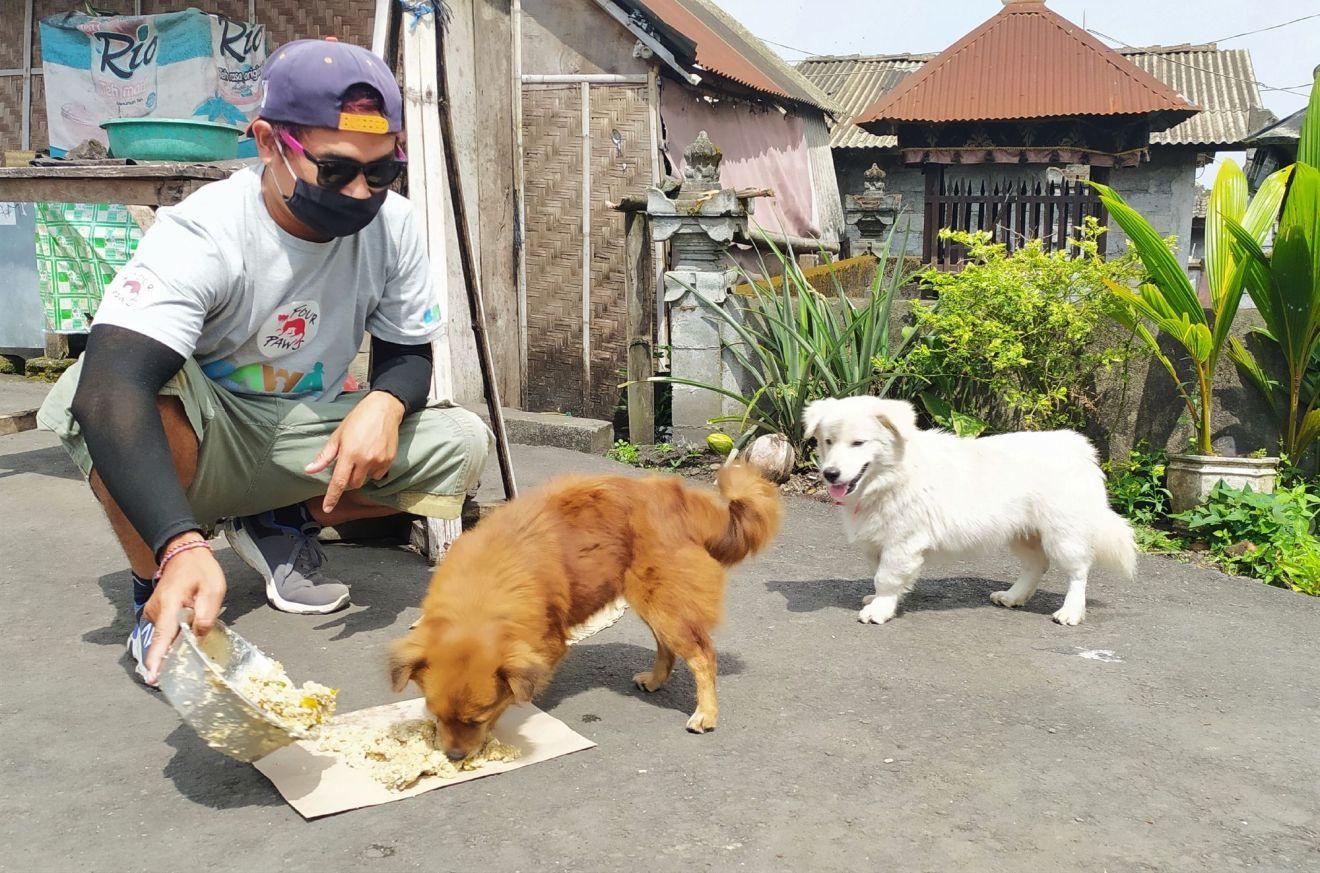 Hungernde Streuner COVID-19 legt Tourismus auf Bali lahm