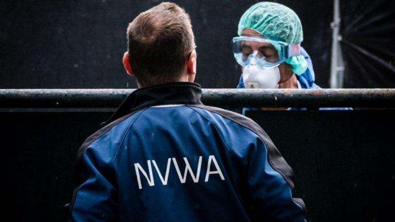 Pelztier-Farmen Niederlande vergast Nerze wegen Corona
