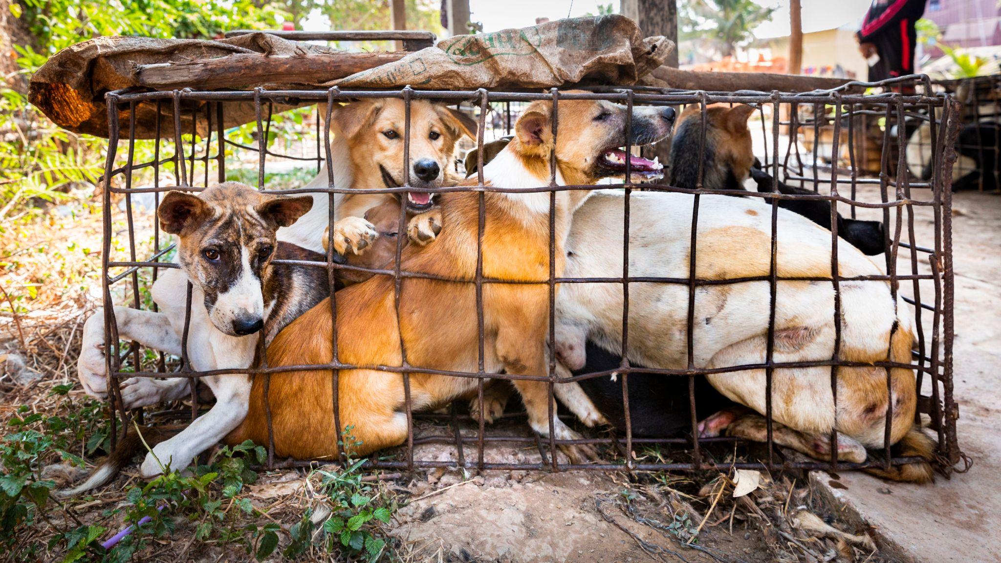 China verbietet den Verkauf von Hunde- und Katzenfleisch