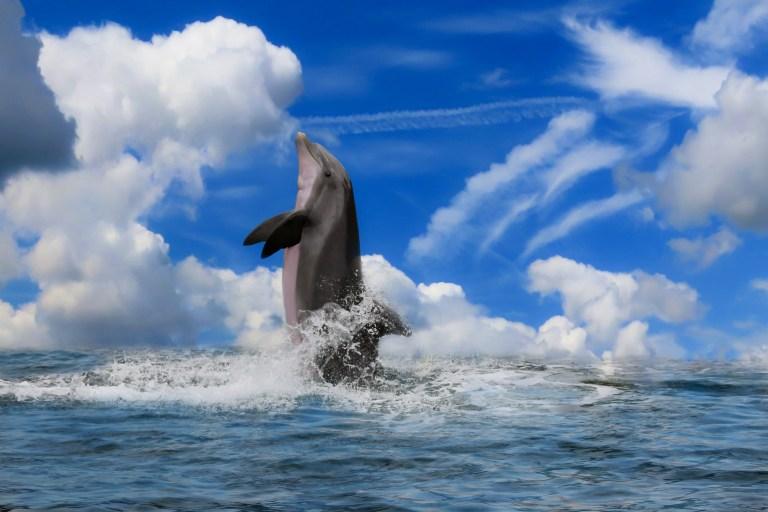 WWF Organisation fordert Schutz und Einsatz für das Mittelmeer