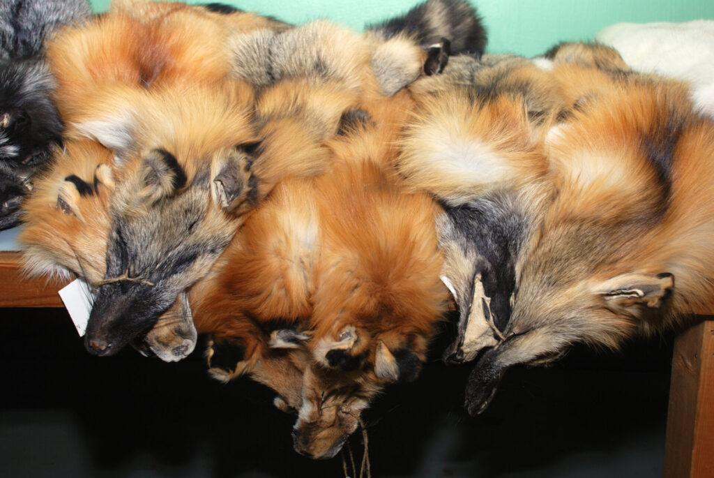 Fellwechsel Coronakrise ist Super-GAU für Pelzindustrie