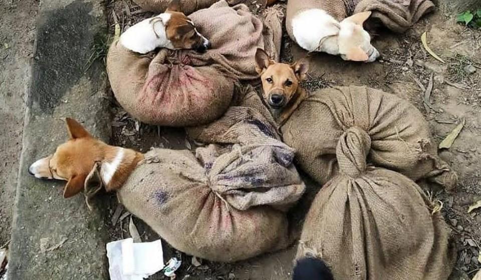 Hundefleischhandel Nagaland in Indien kündigt Ende an