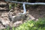 In Graubünden wachsen neue Jäger heran