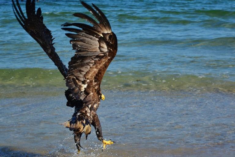 Wildtiere mit Carbofuran vergiftet Hobby-Jäger verurteilt