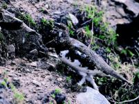 Jagdgesetze: Nein, diese Gesetze sind nicht fortschrittlich