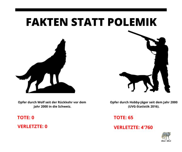 Opfer-vom-Wolf-seit-seiner-Rueckkehr-in-die-Schweiz-1