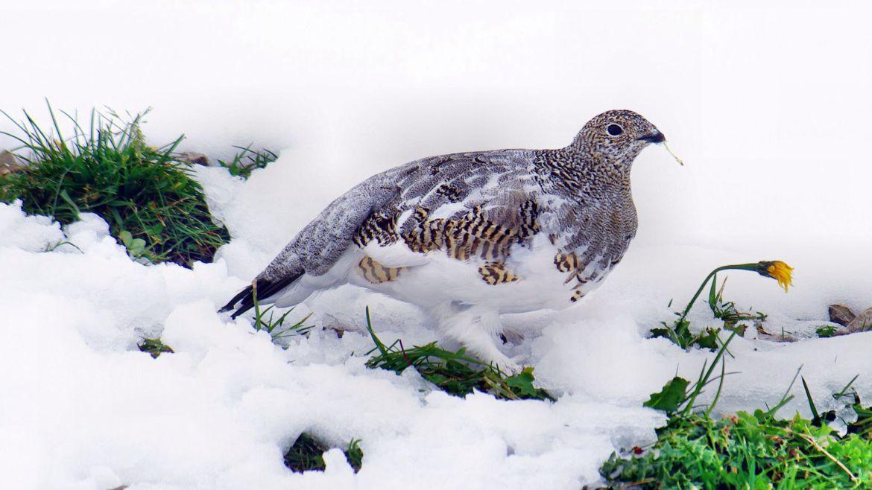Walliser Gesellschaft für Wildtierbiologie lehnt das neue Jagdgesetz ab