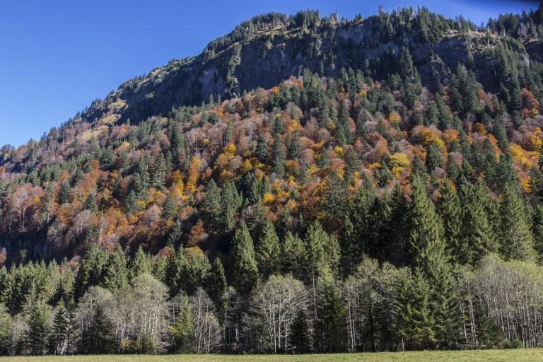 Bergwaldprojekt muss Einsätze in Graubünden abbrechen