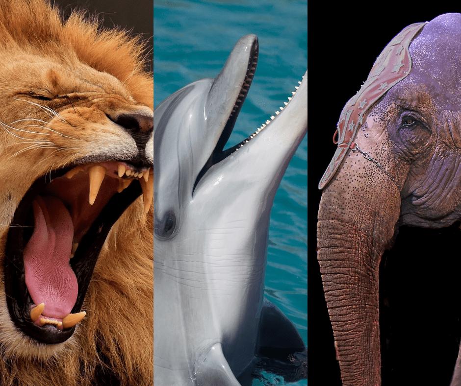 Deutschland: Wildtiere in Zirkussen und in Zoos verbieten