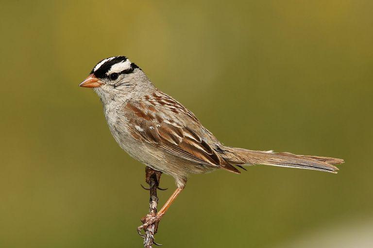 Seit Corona singen Vögel schöner