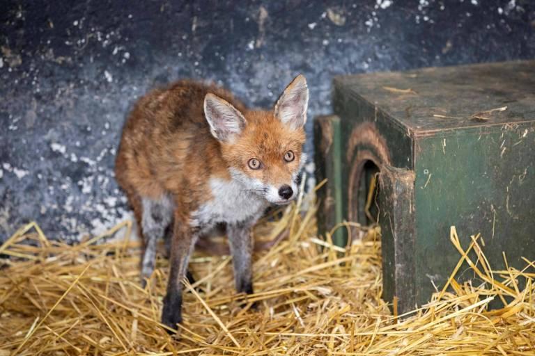 Irisches Pub bewirtet nun Wildtiere