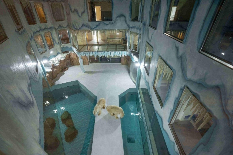 Eisbärenhotel - vom Elend profitieren