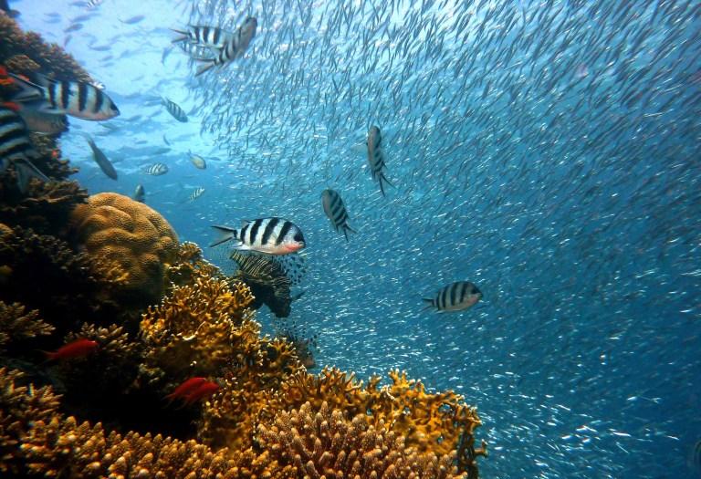 Ozeanerwärmung treibt Fischarten vom Äquator zu den Polen