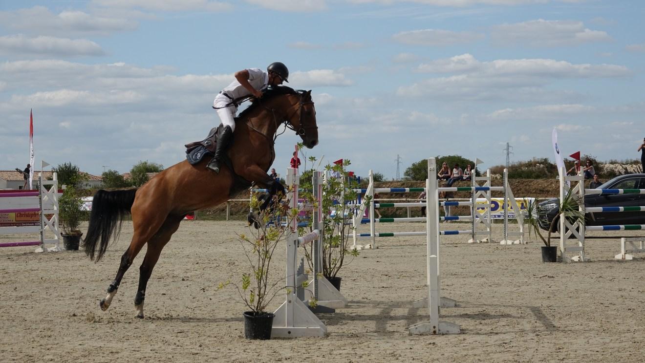 Pferde sind keine Sportgeräte