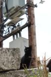 Thasos Gatekeeper #2