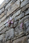 Tholos tomb, Pylos