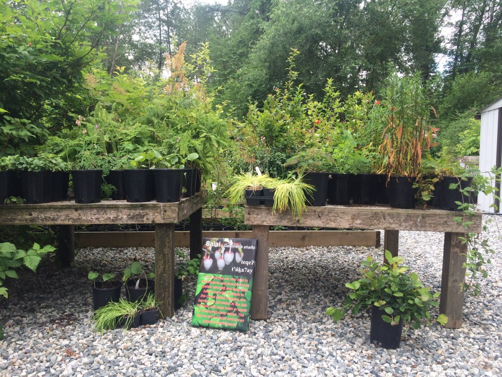 photo of Plant display