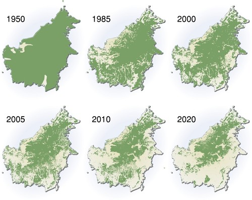Palm Oil Deforestation