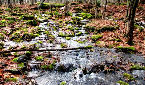Enjoy forest bathing year round, as the stream flows over mossy boulders in winter.