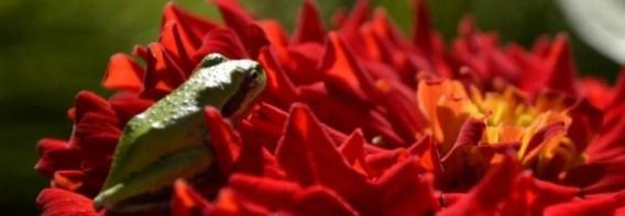 cropped-cropped-cropped-copy-cropped-first-set-1339-frog-on-a-flower-copy.jpg