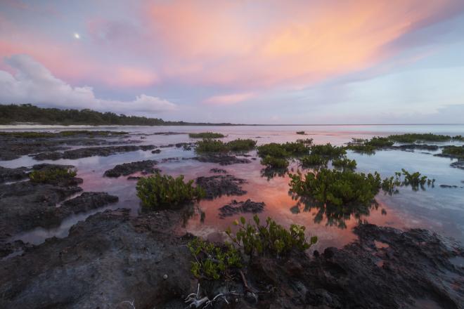 Red Mangrove (Rhizophora mangle), Guanahacabibes Peninsula National Park, Pinar del Rio Province, western Cuba, September
