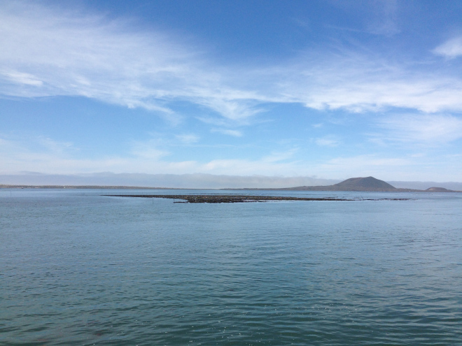 Part of the oyster facility at San Quintin.