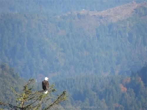 Wonder Wander View Eagle
