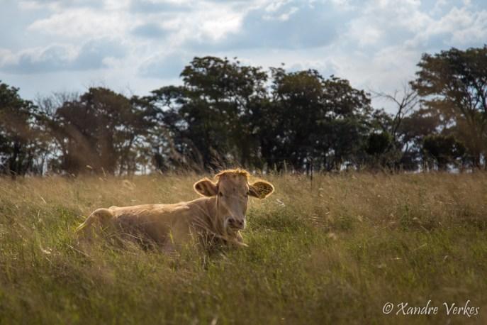 Xandre Verkes - Cattle Farm-17