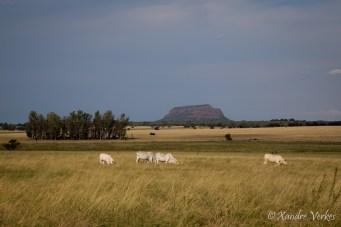 Xandre Verkes - Cattle Farm-18