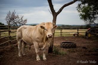 Xandre Verkes - Cattle Farm-25