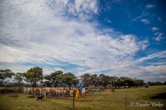 Xandre Verkes - Cattle Farm-8