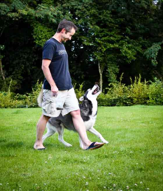 Juno Training Mr. Wild Dingo