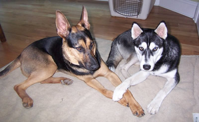 Loki & Juno