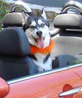 juno-car-ride-3