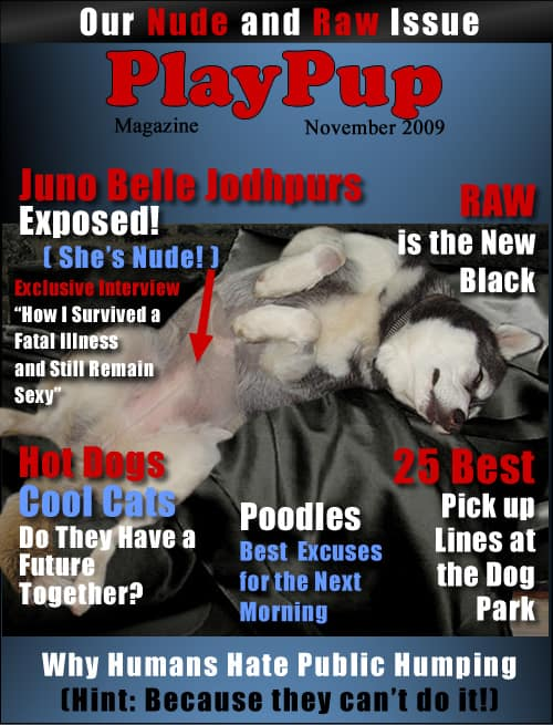 play-pup-magazine3