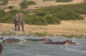 Classic Uganda Wildlife Safari Adventure