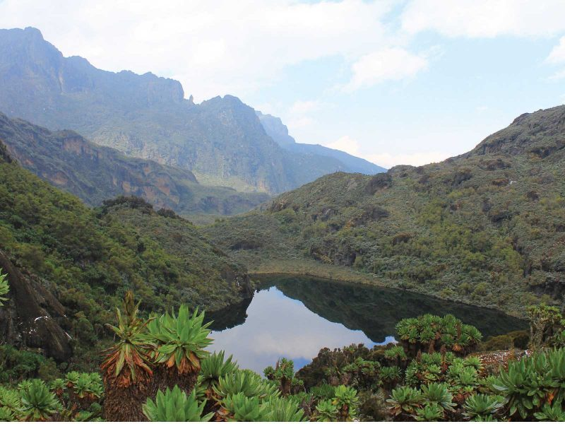 Rwenzori Mountains Safari