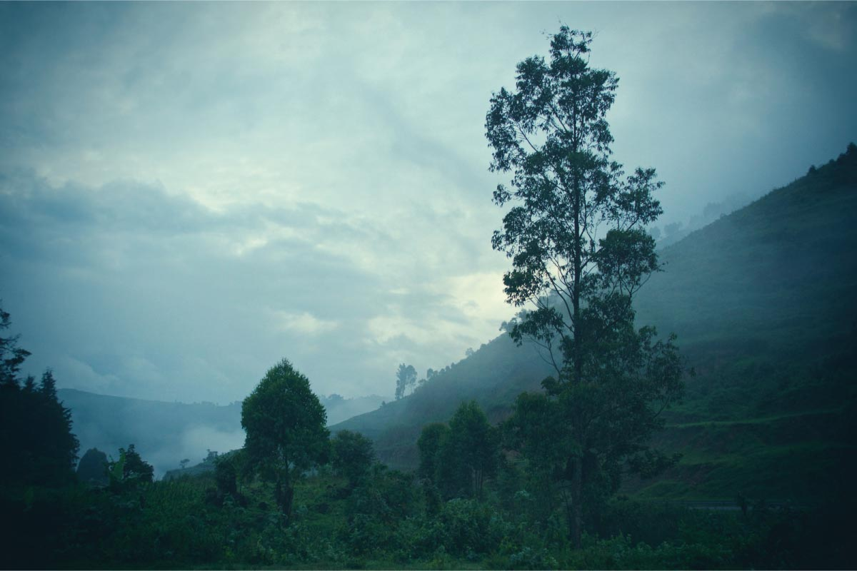 Misty Bwindi Impenetrable Forest