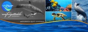 Wild Dolphin Swims Hawaii with Roberta Quist Goodman
