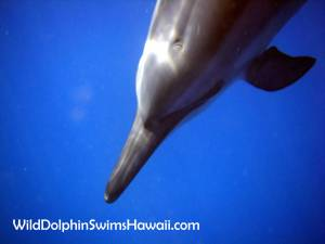 Dolphin Facts 13