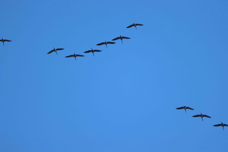 Neue Vogelarten im Februar