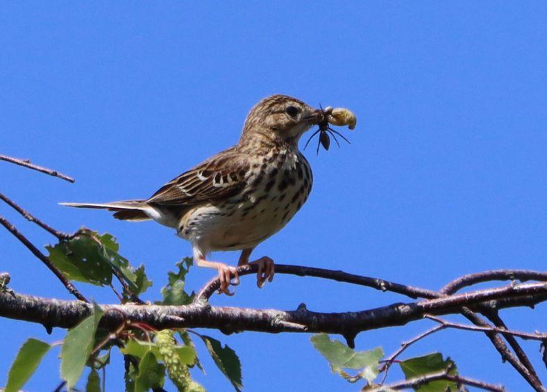 Neue Vogelarten im Mai