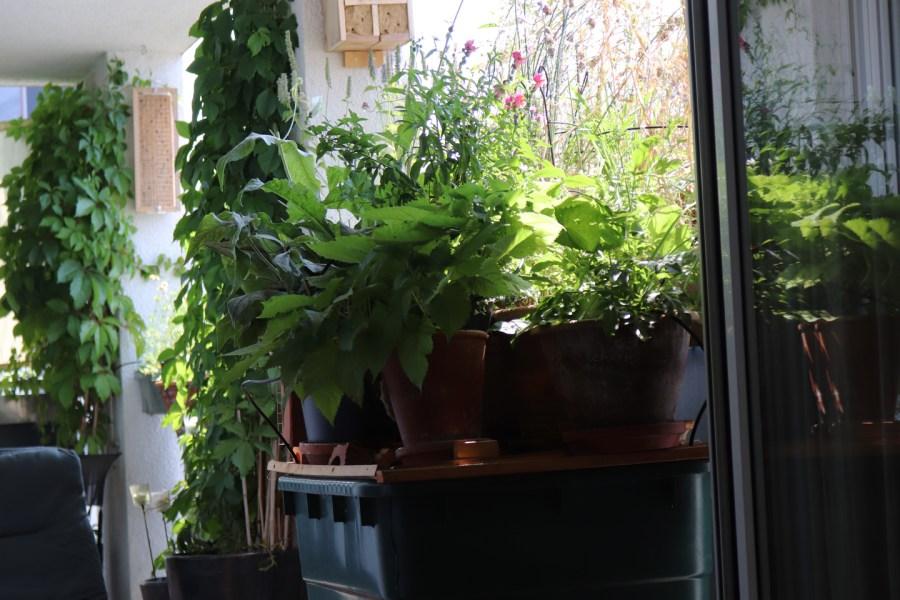 Der Wilde Meter vom Wohnzimmersofa aus: grün.