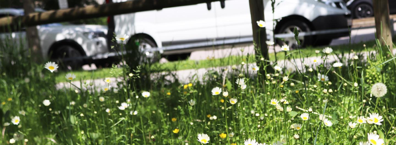 Artenvielfalt im öffentlichen Grün in der Stadt