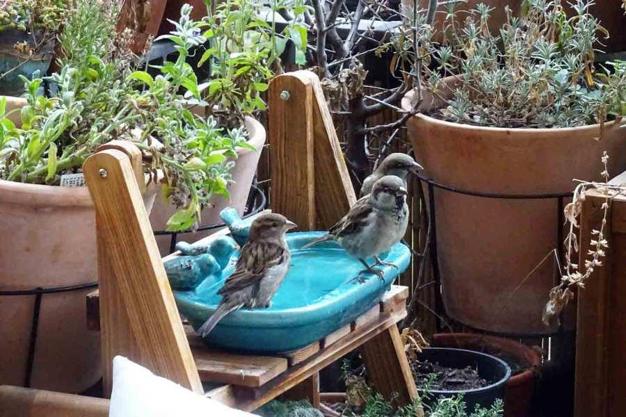 Spatzen an der Vogeltränke von Daniela Berg.