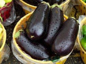 Purple Eggplants Indoor
