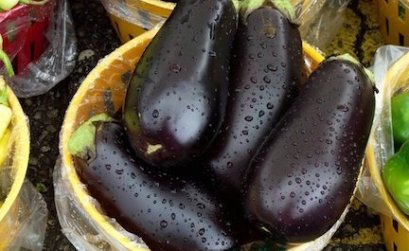 Purple Eggplants Indoor