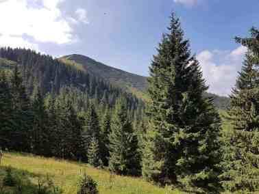 European Wilderness Diary-20378
