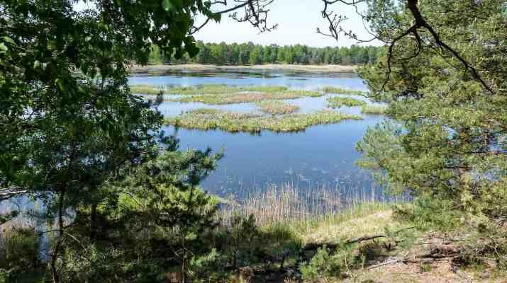Lieberose Wilderness © All rights reserved